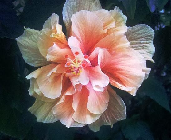 Grandview Gardens Bed & Breakfast: Beautiful Flowers