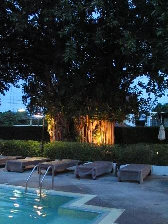 โรงแรมริมปิง วิลเลจ: l arbre centenaire depuis ala piscine