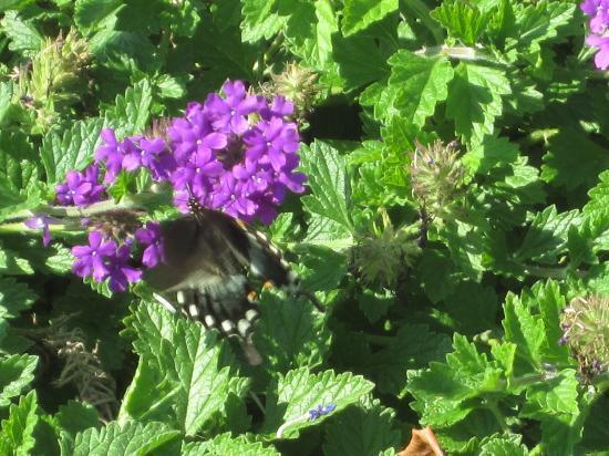 Newport News, VA: Butterfly