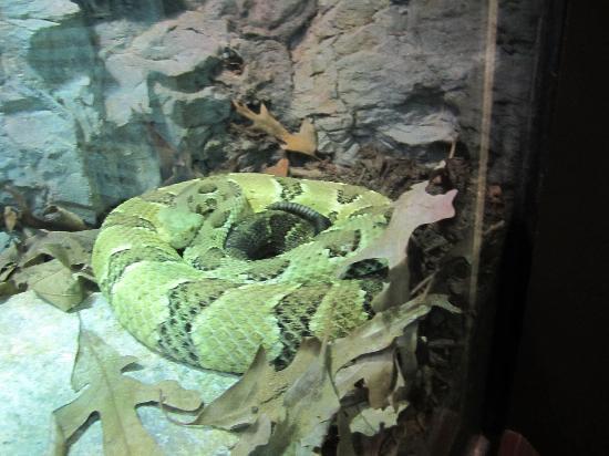 Newport News, VA: Rattlesnake in VA