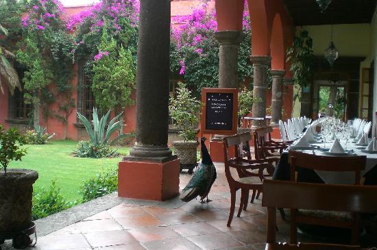 San Juan del Rio, เม็กซิโก: Aves En Área De Restaurante