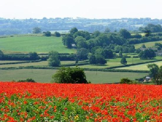 Corsham Field Farmhouse: Breathtaking field of Flanders poppies nearby