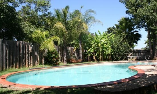 Magnolia Guesthouse: Pool