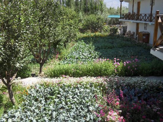 พัดม่า เกสท์เฮ้าส์ & โฮเต็ล: The Garden and the building