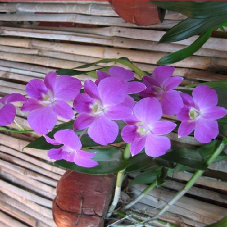 Golden TaKeo Guesthouse: Orchid