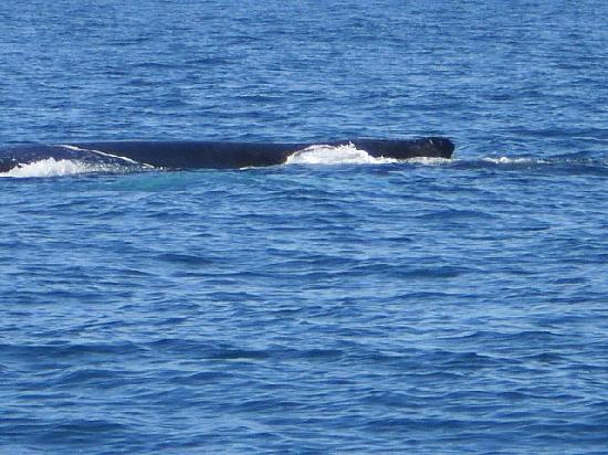 Mariner Cruises Whale and Seabird Tours: whales