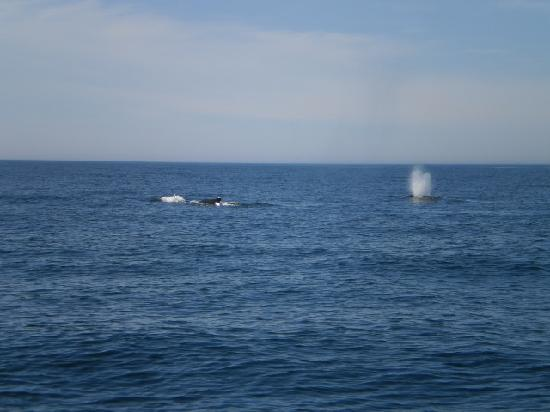 Mariner Cruises Whale and Seabird Tours: gotta love mother nature