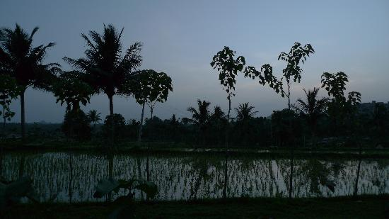 Shanthi Guesthouse: view  from our cottage sit-out in the evening