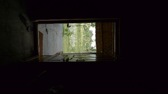 Shanthi Guesthouse: from inside the cottage