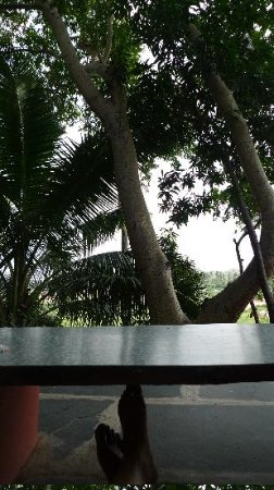 view from Mango tree