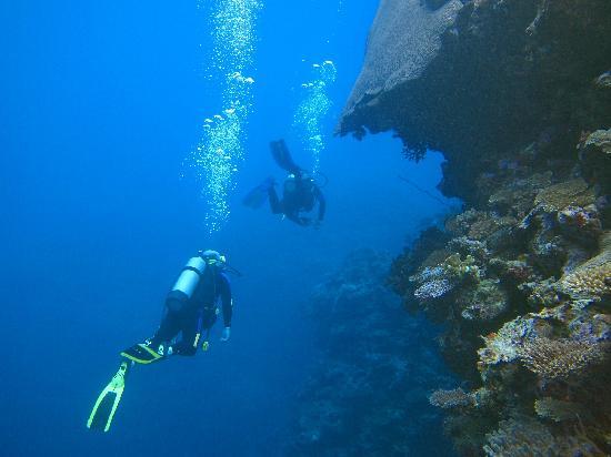 Koromakawa Resort: more diving