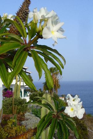 Hotel Jardin Tecina: Garden view