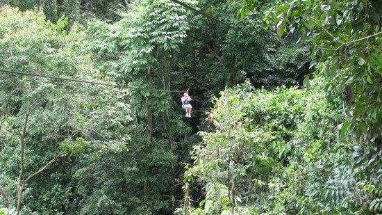 Canopy Safari: ziplining