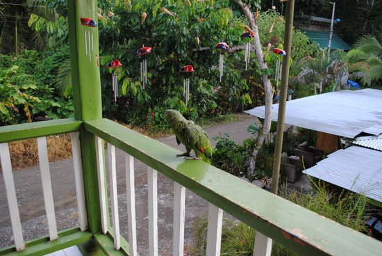 Cabinas Manzanillo: The balcony and parrot (which greeted us)