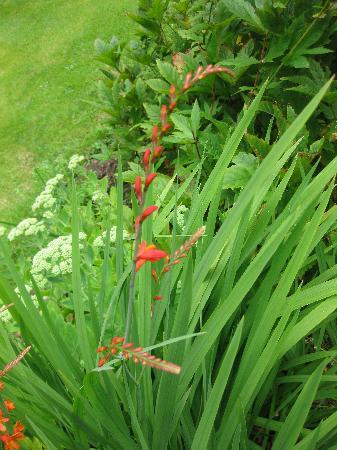 Murrayfield B&B: Gardenflowers