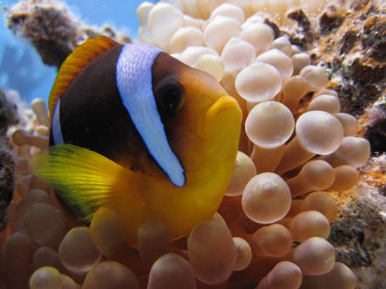 Sea Dancer Dive Center: Nemo