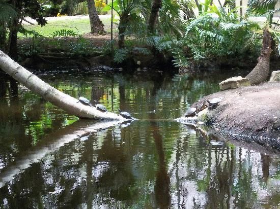 Grand Paradise Samana : the lagoon on the hotel grounds