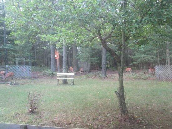 Fernwood Inn: Friendly gueats in the yard!