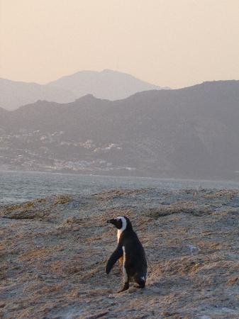 Boulders Beach at sunset (5.30pm)