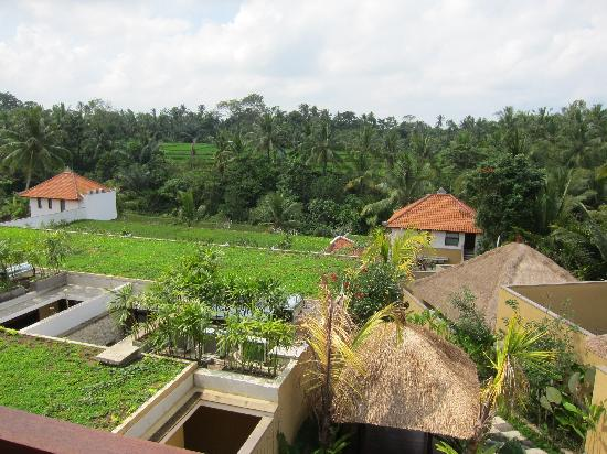 Ubud Green: view from restaurant