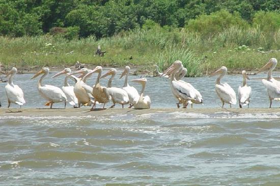 Eco Di Mare Tours: Aves en Laguna Los Micos