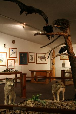 Haliburton Forest and Wild Life Reserve : Displays in the Wolf Centre.