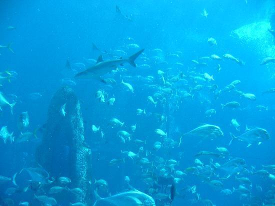 Le Royal Meridien Beach Resort & Spa: Atlantis Aquarium