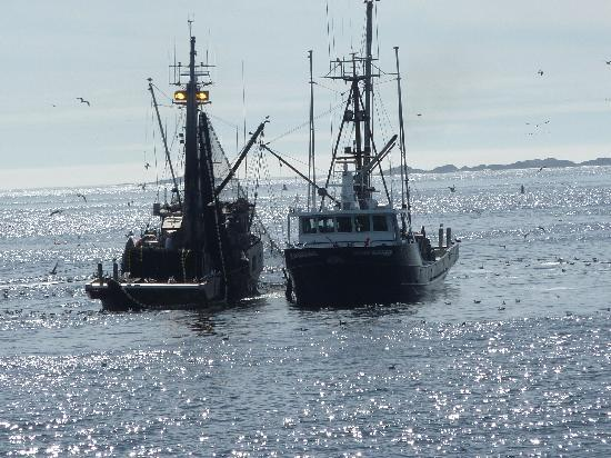 Lady Rose Marine Services: Fishing Boats working the waters