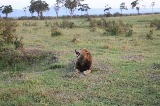 Neptune Village Beach Resort & Spa: Masai Mara