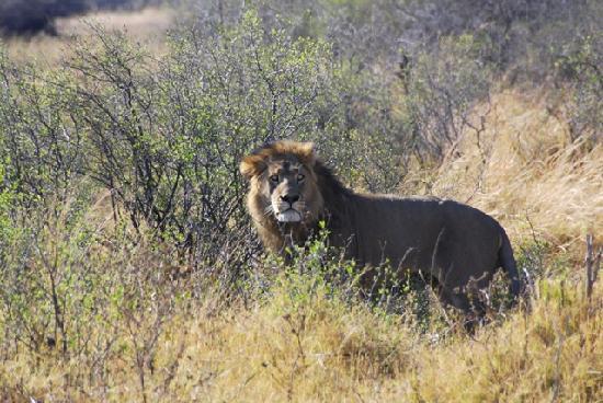 Caprivi Region, Namibia: Der König von Nkasa Lupala