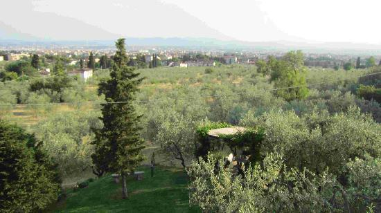 Casavaliversi B&B: The olive grove