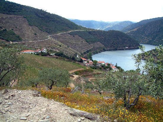 Douro Valley : QUINTA DE VARGELLAS
