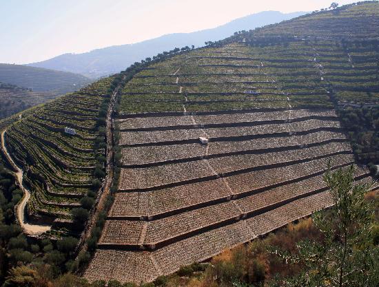 Douro Valley : different kind of old terraces (Quinta do Bom Retiro / Quinta da Côrte)