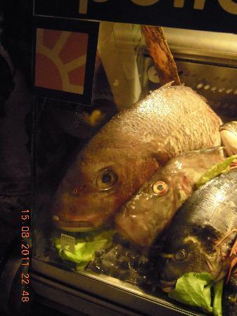Jadran Kod Krsta: fish