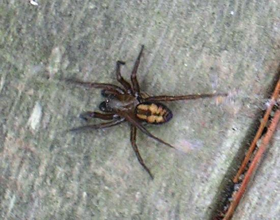 Days Inn Salisbury: This is a picture of the spider that was on my wall in the AM, I covered it with a cup, took it