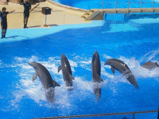 Santa Susanna Resort: Marine land dolphin show