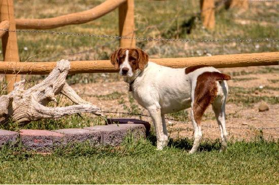 High Rock Ranch: Jesse resident dog