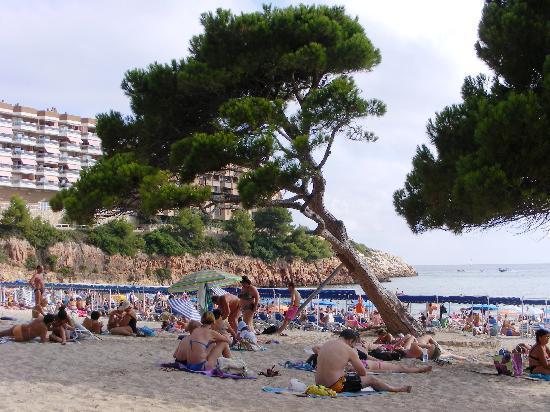 Playa Los Capellanes: playa