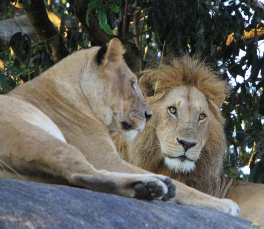 Sayari Camp, Asilia Africa: Mr and Mrs. Simba
