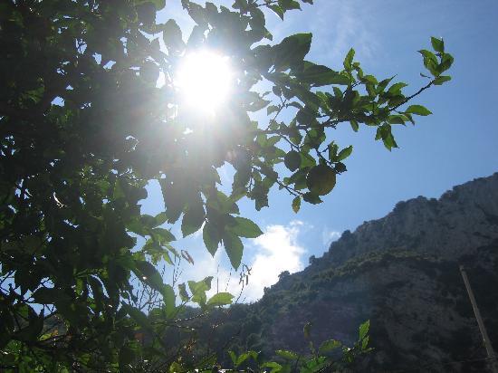 Ristorante Casale Villarena: Sun through a lemon tree
