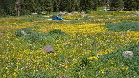 Wild Flowers In Full Bloom Picture Of Switzerland Of