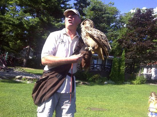 Severn Lodge: falconry show