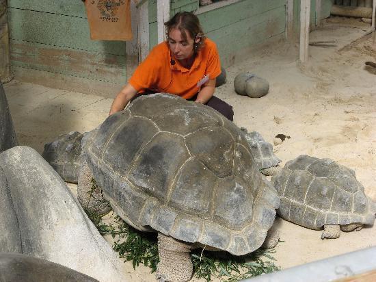 La Ferme aux Crocodiles : repas des tortues