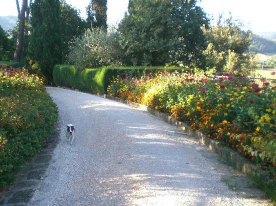 Tenuta Di Fassia: passeggiata in villa tra i fiori