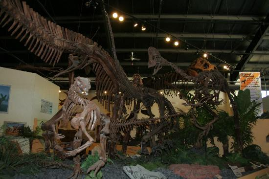 Rocky Mountain Dinosaur Resource Center : dino skeletons