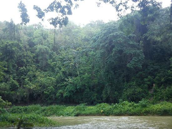 Martha Brae River: Scenery