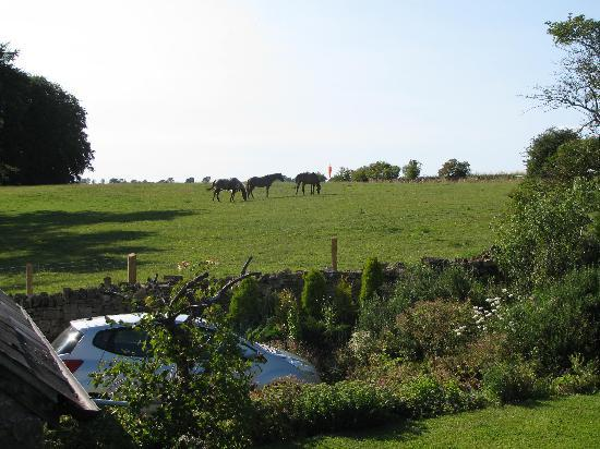 Foxhill B&B: View toward a paddock