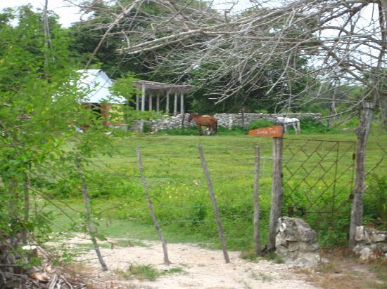 Maruba Resort Jungle Spa: The stables