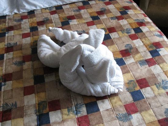 Cairns Motel: Towel Art Dog