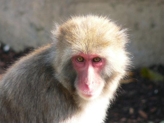 One of the inhabitants